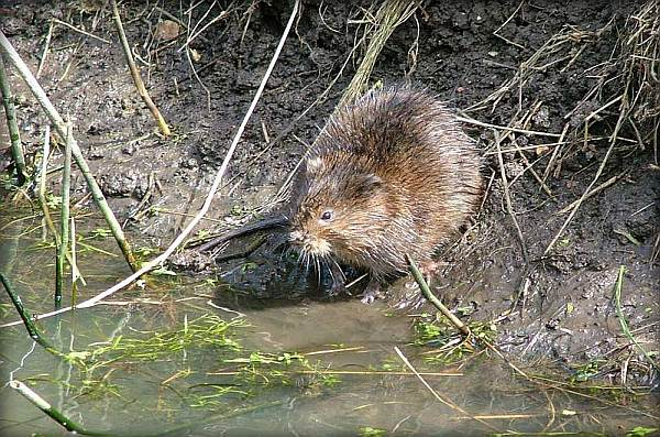 Water Vole and Otter Surveys